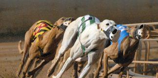 Cursele britanice de ogari British greyhound racing
